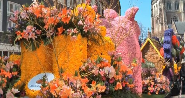 This flower parade can be attended once a year. This starts in Noordwijk and ends festively in Haarlem