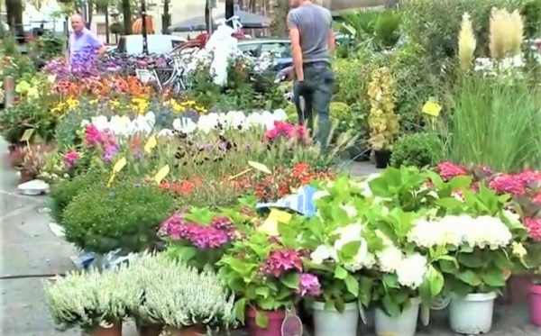The flower market of Utrecht is open all year round on Saturdays. It is one of the better flower markets in our country, to be found on the Old Canal and the Janskerkhof